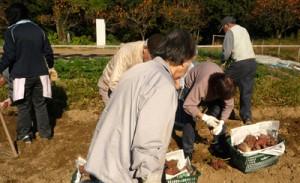 デイサービス芋掘り2010_1