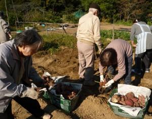 デイサービス芋掘り20102