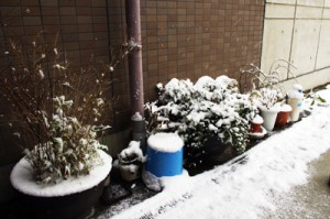 花乃舎雪景色2