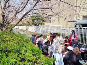桜を見ながら合唱