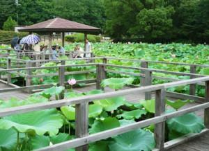 蓮の花公園